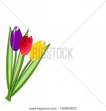 Bouquet of three colored tulip. Raster illustration
