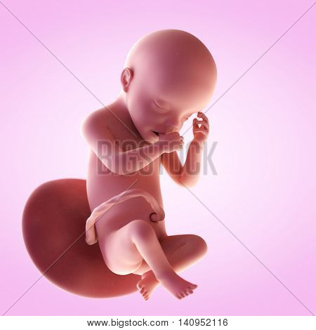 3d rendered medically accurate illustration of a fetus in week 30