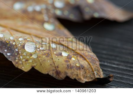Yellow autum leaf with raindrops, close up of water drops