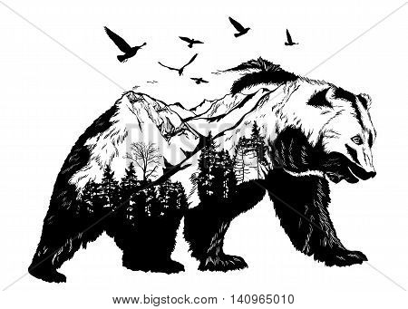 Hand drawn bear for your design wildlife concept
