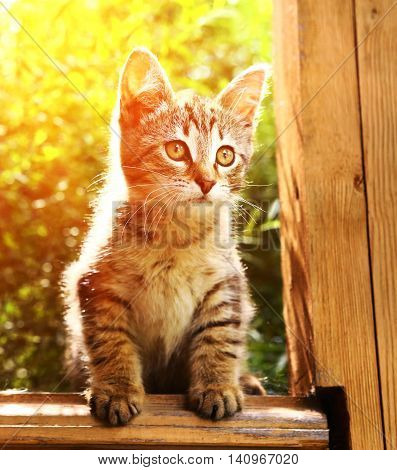 gray kitten on the summer garden background close up photo sit on the porch