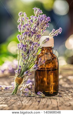 Bunch of lavandula or lavender flowers and oil bottle are on the old wooden table.