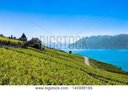 Vineyards In Lavaux Region - Terrasses De Lavaux Terraces, Switzerland