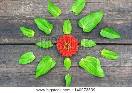Red Flower With Green Leaves On The Vintage Wooden Floor