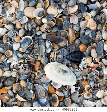 A Wide Variety Of Seashells Display Texture And Color On A Sandy Beach While Photographed In Early M