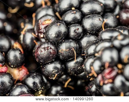 Closeup shot of freah and juicy blackberries