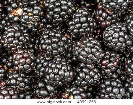 Background of freah and juicy blackberries