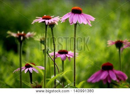 Abstract  colourfull  Garden  Flowerbed  Scene  London  England