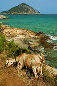 Постер, плакат: Скалистый пляж в Остров Тасос Греция
