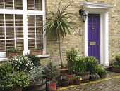 picture of house plant  - A mews house with plants in London