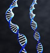 stock photo of double helix  - 2 double helix strands of DNA with Dark background - JPG