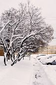 foto of parking lot  - A picture of a thick blanket of snow covering a residentail urban driveway - JPG