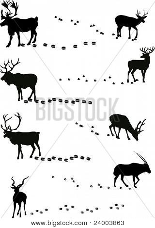 illustration with deers and its tracks isolated on white