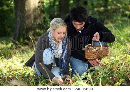 junges Paar Pilze sammeln