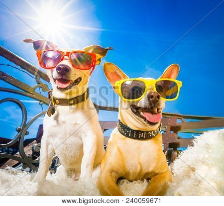 Couple Of Dogs With Sunglasses