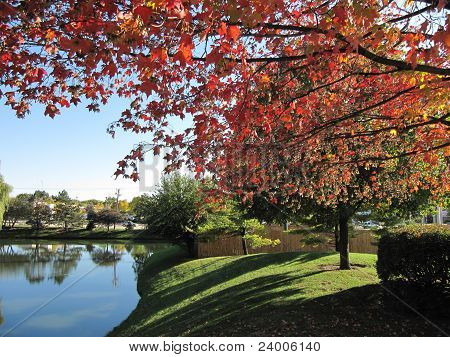 Suburban neighborhood landscaping with trees showing bright red fall leaves
