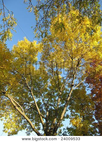 Beautiful colorful trees in fall with orange and yellow leaves