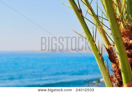 Date palm branches