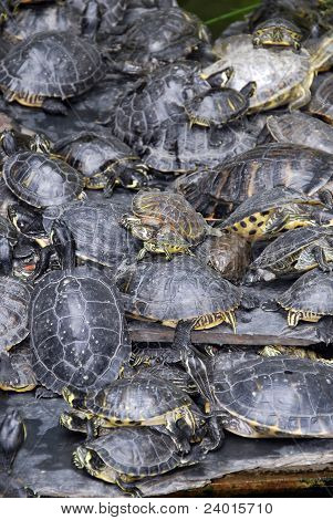 Trutles Stacked