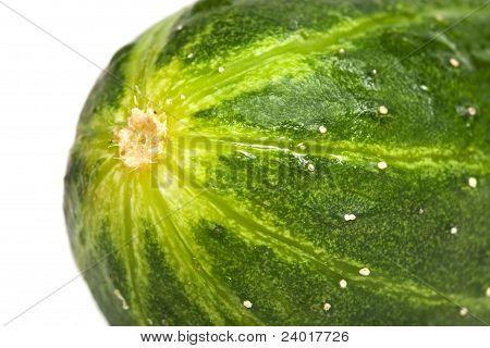 Cucumber Closeup