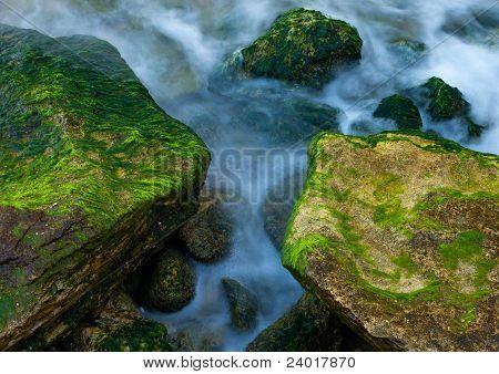 Rocks And Weed At Sea Coast