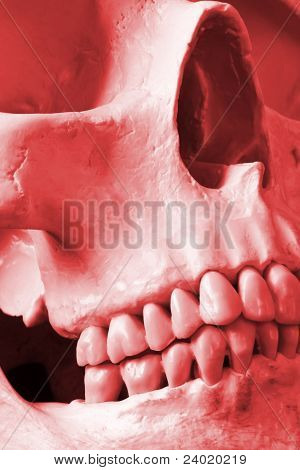 A Close Up Of A Human Skull In Red