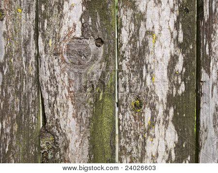 Weathered Moldy Fence