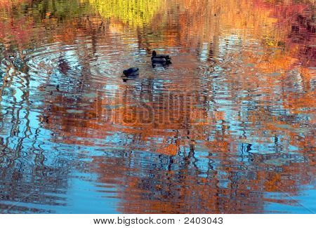 Autumn Trees Reflections