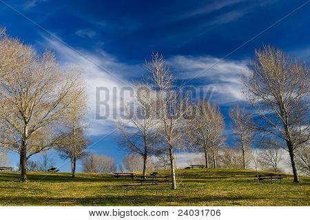 park for picnic