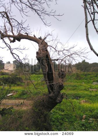 Tree Ruins