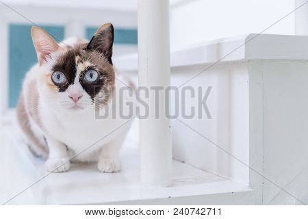 poster of Cat Pictures, Cat Eyes, Pictures Of The Most Beautiful Cat Eyes, Cute Cat, Innocent Cat Pictures, Cl
