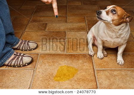 Dog Pee Sad