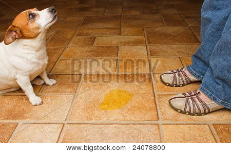 Dog Pee Scold Front
