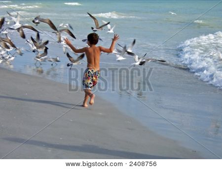 Boy Chasing Birds
