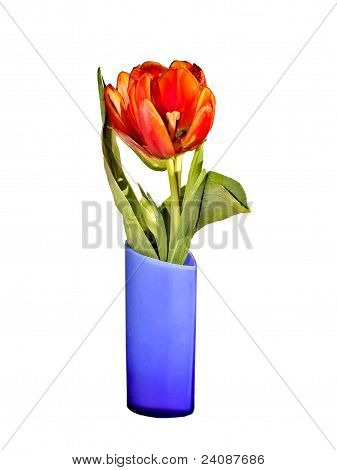 tulips in blue vase on a white background