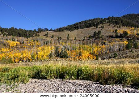 Autumn scene in Wyoming