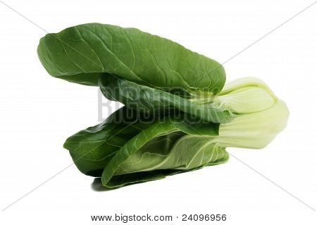 Pok Choi Freshly Cleaned On A Bright Background