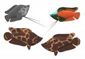 A Pair Of Leopard Bush Fish And A Pair Of Dwarf Gourami In A 3d Illustration poster