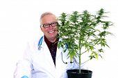 Marijuana Doctor or Scientist or Botanist or Chemist smiles with one of his Flowering Female Marijua poster