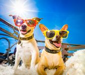 Couple Of Dogs  With Sunglasses At Balcony  Enjoying The Sun And Hot Weather At Summer Vacation Holi poster