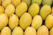 Yellow Mango Photo Background. Bunch Of Tropical Fruits. Oval Yellow Mango Pile. Sweet Dessert Or Ve poster