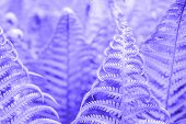 Vibrant Natural Fern Texture Pattern. Beautiful Tropical Forest Or Jungle Foliage Background. Ultrav poster