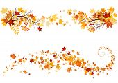 stock photo of canada maple leaf  - Autumn maple leaves different borders for design - JPG