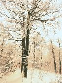 Winter Wonderland With Forest Snowy Winter Trees. Cold Toned Winter Landscape Scene - Snowy Winter F poster