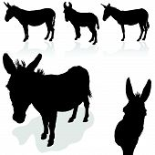 picture of quadruped  - donkey black vector silhouette on white background - JPG