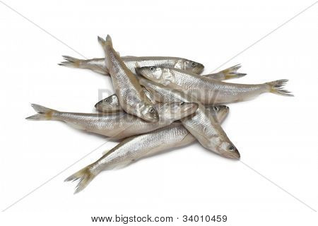 Fresh European smelt fishes on white background
