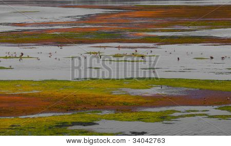 Colorful summer scenery in a watershed environment