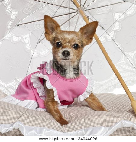 Yorkshire Terrier, 9 years old, sitting under parasol against white background