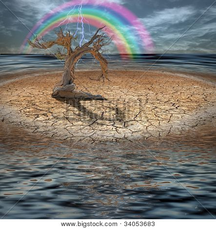 Desert Deluge with rainbow and gnarled tree