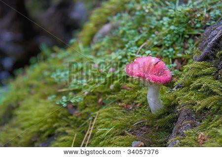 Mushroom in woods
